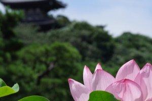 Taman-taman Sankei-en adalah salah satu lahan hijau yang paling disukai di Yokohama
