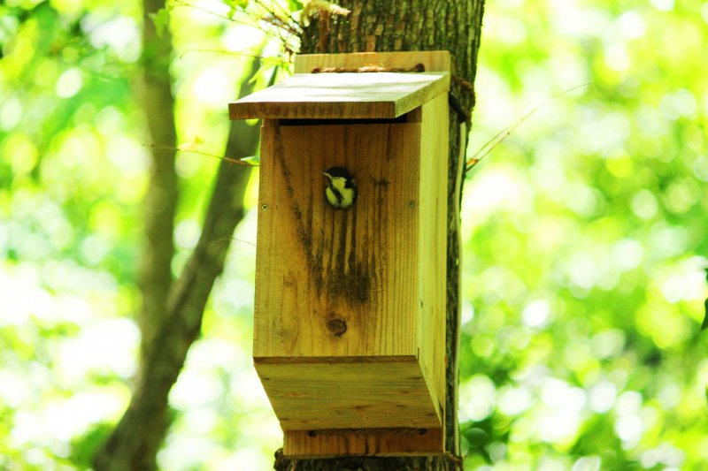 <p>A bird box; they have something similar for the flying squirrels</p>