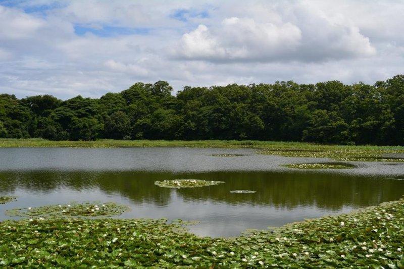 <p>Озеро с кувшинками неподалеку от городка Авара</p>