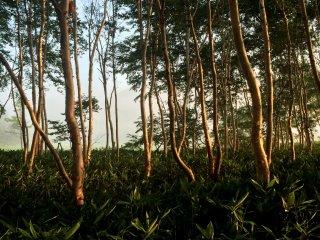 Light illuminates the trees near the foot of the mountain.