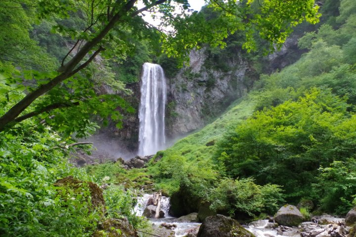 Hot Springs & Green in Hirayu Onsen