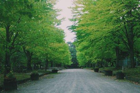 Musim Panas di Hirosaki