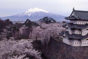 <p>Hirosaki Park in spring.</p>
