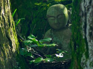 A estátua de Araragi Taishi no meio de grandes árvores (templo nº 14)