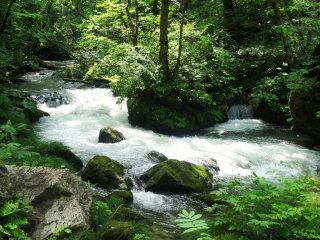 The stream has both calm sections and small rapids