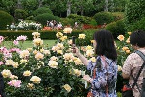 Rose varieties bloom most of the spring thru' Fall.