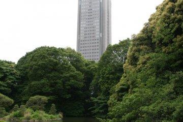 A quiet oasis amidst city buildings.