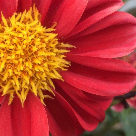 Bunga Musim Panas di Chiba