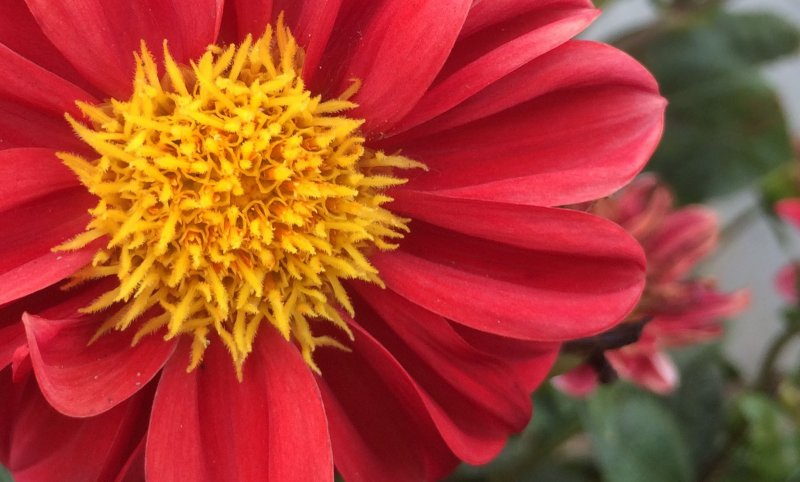 <p>A tight crop of this photo shows the vibrant colors and nuances within the petals.&nbsp;</p>