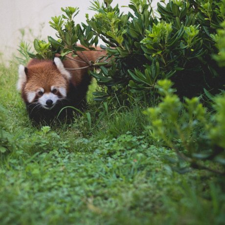 Vườn thú Thành phố Kyoto