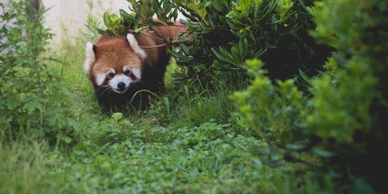 kyoto city zoo - kyoto