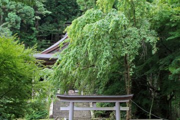 <p>The main prayer hall obscured by its weeping sakura tree</p>