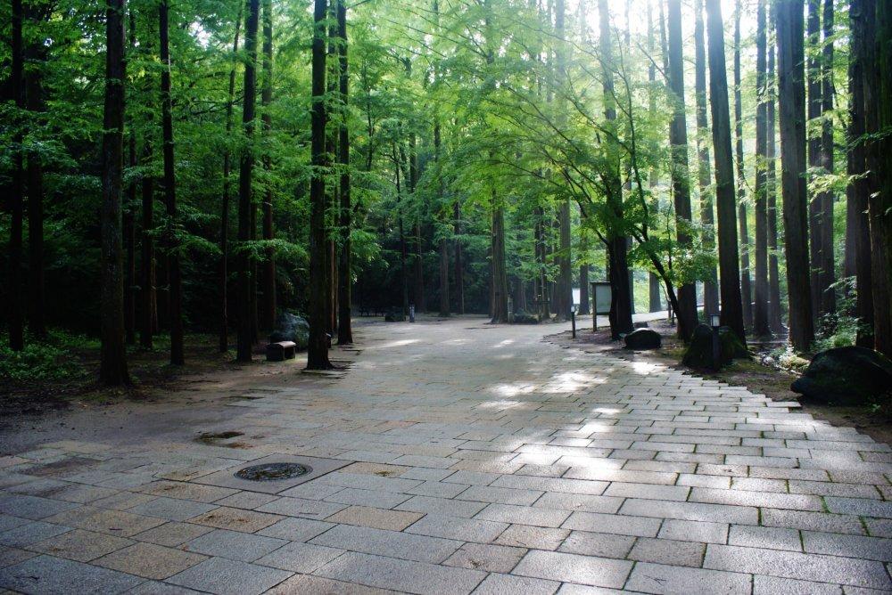 Le parc Ikuta, apaisant