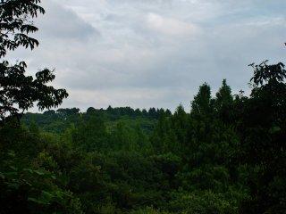 Une forêt de chênes à perte de vue