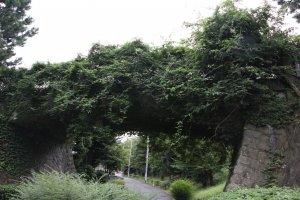 Мост в северо-восточной части парка весь в зелени