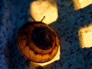 蝸牛のランプシェード