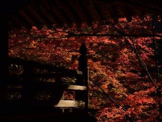 Ворота храма и осенний листопад