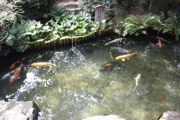 <p>Японский пруд с карпами</p>