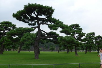 <p>The route is lined with parts of the Imperial Garden.&nbsp;</p>