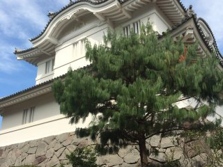 Otaki Castle costs 500 yen to go inside. The outside garden area is free.