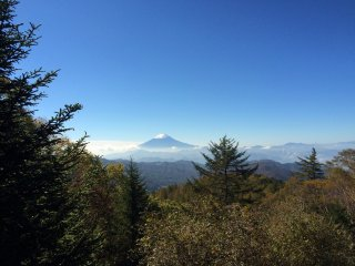 富士山藏在树林后面