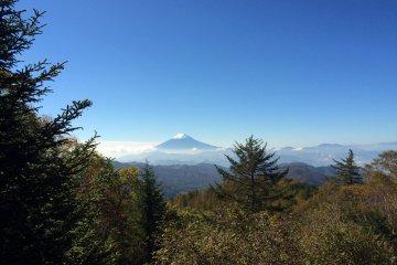 <p>富士山藏在树林后面</p>