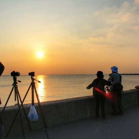 Melihat Matahari Terbenam di Taman Pinggir Pantai
