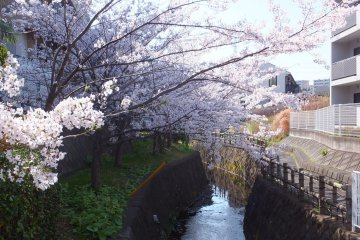 <p>Higashi Totsuka Waterway</p>