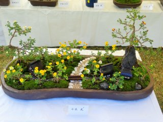 The bonsai mums in this pot form the basis of a miniature garden scene