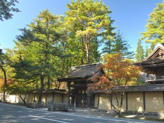 Trees dressed up in different colours outside Kangakuin