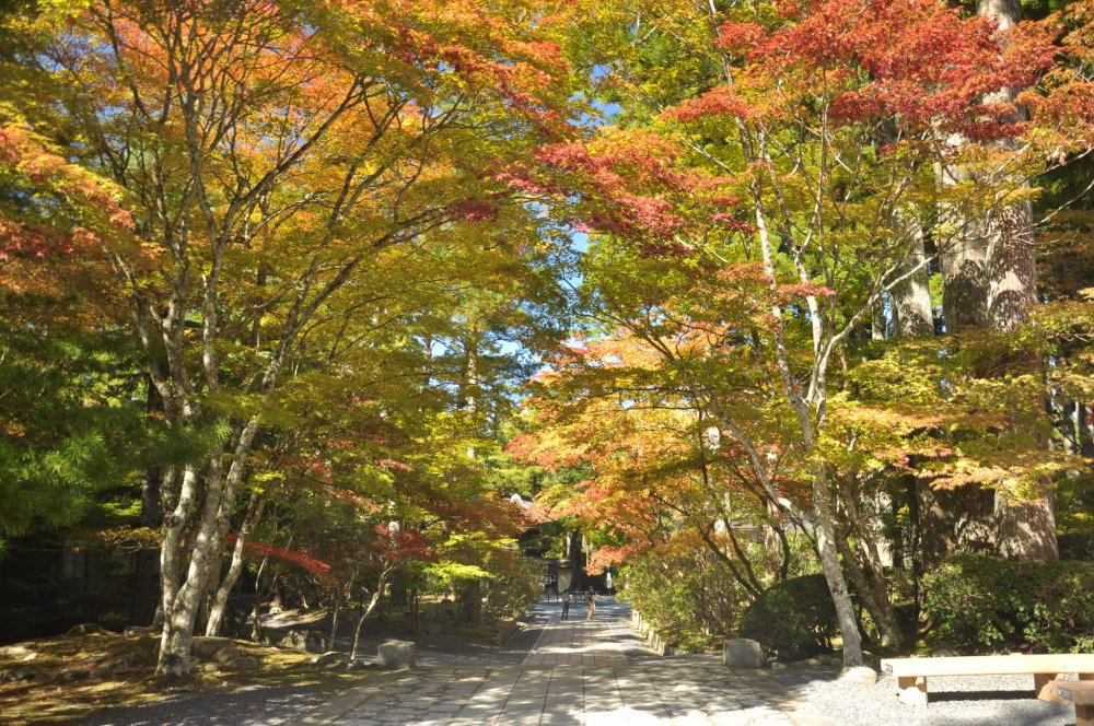 The path leading toReihokan Museum becomes much more attractive