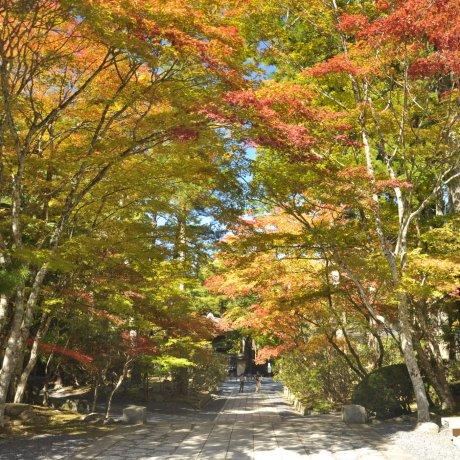 Red Leaves on Koya-san