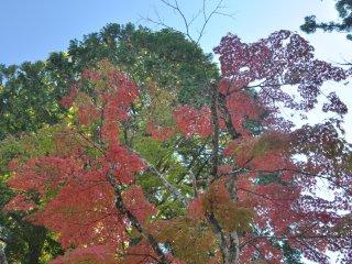 Foliage next toDanjo Garan