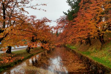 <p>Surreal red leaves in Hirosaki</p>