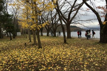 <p>Some gingko yellow leaves remain near the lakeside.</p>