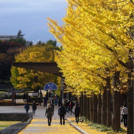 Autumn at Showa Kinen Park