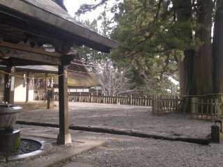 Chōzuya (purification spring) and a huge cedar tree at the front plaza of the shrine.