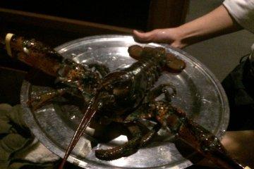 <p>L size的龙虾</p>