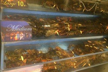 <p>门口陈列的龙虾</p>