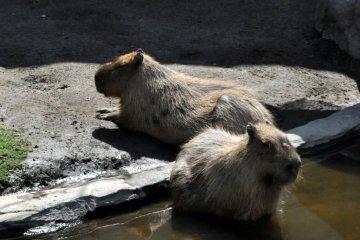 旭山动物园, 北海道旭川