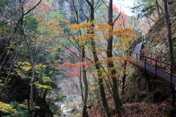 <p>The trail between Mitarai Falls and the Kanon Mountain Hiking Trailhead</p>