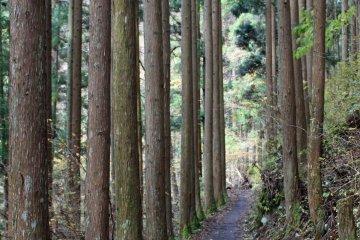 <p>Near the Kanon Mountain Hiking Trailhead</p>