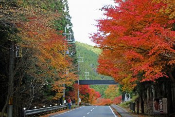 <p>The Mitarai Canyon Hiking Trail follows this stretch of Prefectural Route 21 just above the Kanon Mountain Hiking Trailhead&#39;s parking lot</p>