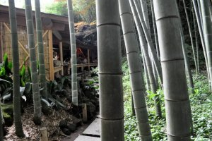 Tea house set in bamboo grove