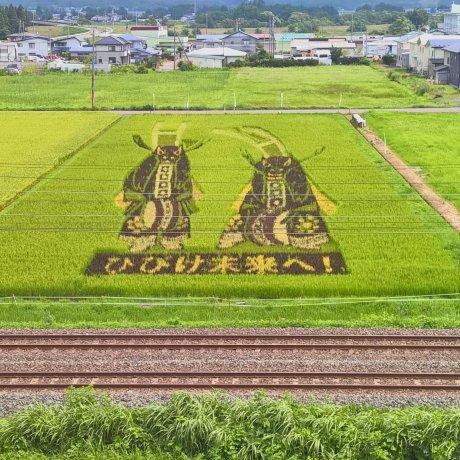 Heritage Black Rice