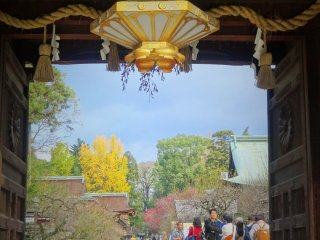 Sekilas melalui pintu gerbang Kitano Tenmangu memperlihatkan ginkgo emas