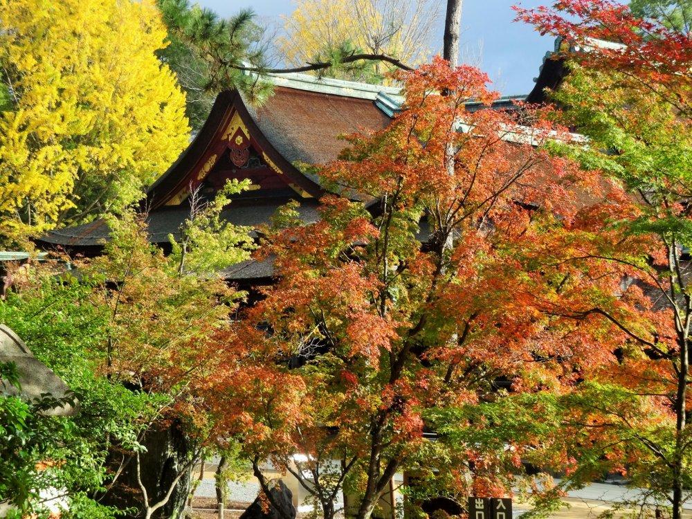 Dedaunan di sekitar salah satu bangunan di sisi kuil