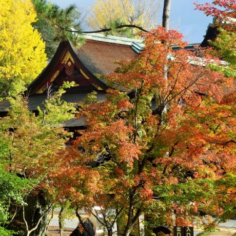 Kitano Tenmangu's Maple Path