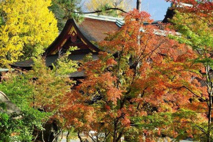 Chemin d'Erables de Kitano Tenmangu
