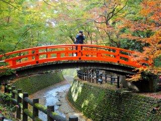 Sebuah jembatan di sepanjang koridor maple